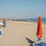 Kuhherde am Strand von Pietrapaola