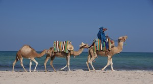 Kamele am Strand von Djerba &copy; tokamuwi / Quelle: pixelio.de